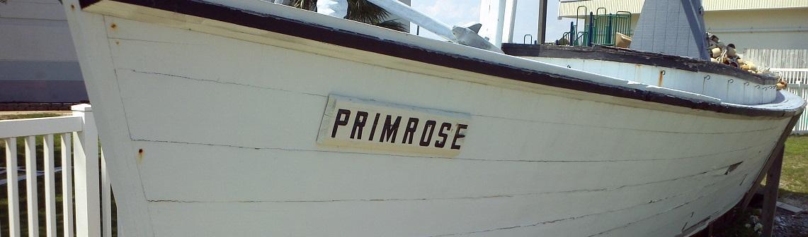 Primrose 7