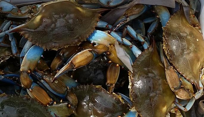 Live Crabs 2