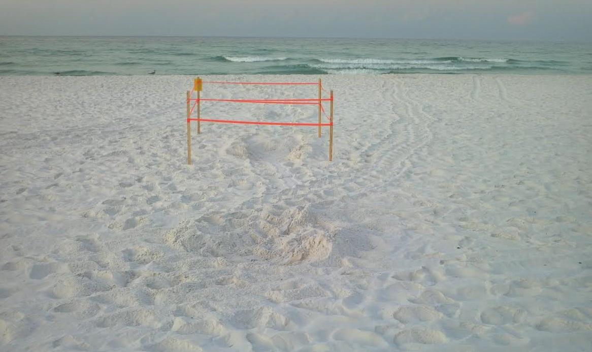 Turtle Nest in Destin Florida